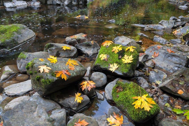 Fall-Ahornblätter bei Cedar Creek stockfotos