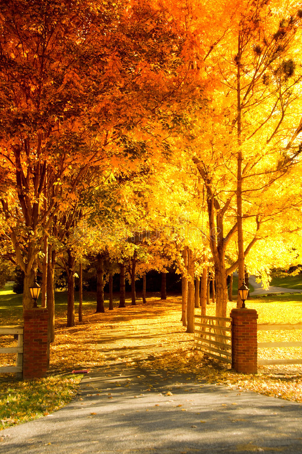 Download Fall alley stock photo. Image of path, colorful, sunlight - 6180642