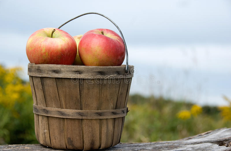 Fall Apples royalty free stock photos