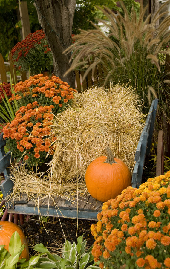 Download Fall Arrangement stock image. Image of mums, blue, ferns - 6682627