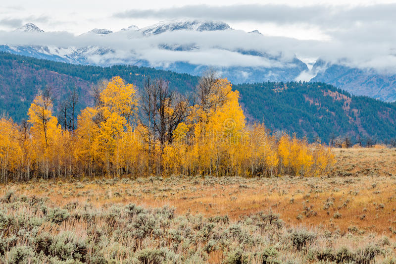 Fall Aspens of the Tetons stock images