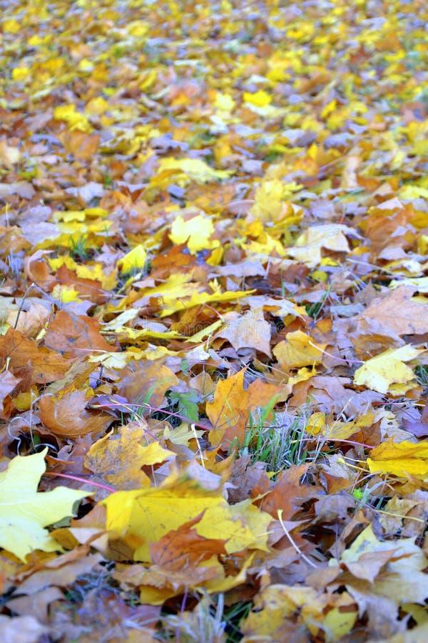 Fall autmn leaves stock photo
