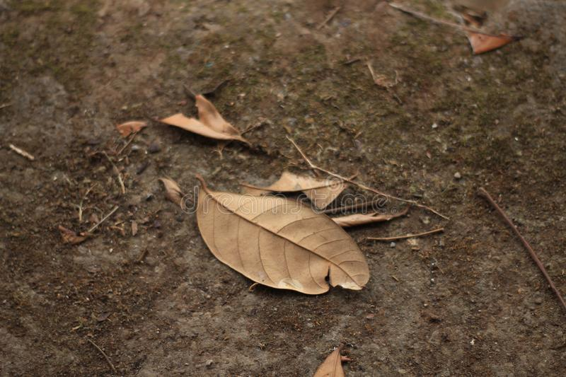 Fall in autum. Leaf fall when autum come royalty free stock images