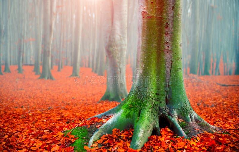 Fall Autumn Landscape Schöner herbstlicher Park mit hellen Rotblättern und alten dunklen Bäumen Abstrakte natürliche Hintergründe stockfotografie