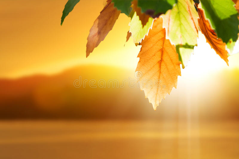 Fall autumn leaves. Autumn leaves against sunset lake royalty free stock photography