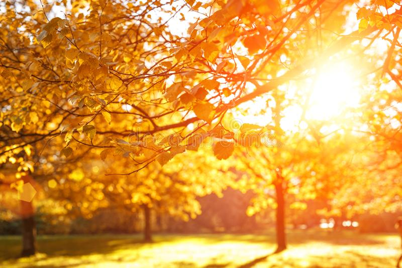 Fall, autumn, leaves background. Tree branch with autumn leaves of a maple on a blurred background. Landscape in autumn season. Fall, autumn, leaves background stock photography