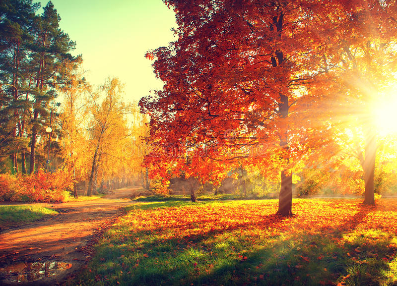 Fall. Autumn Park. Autumnal Trees and Leaves in sun rays stock photography