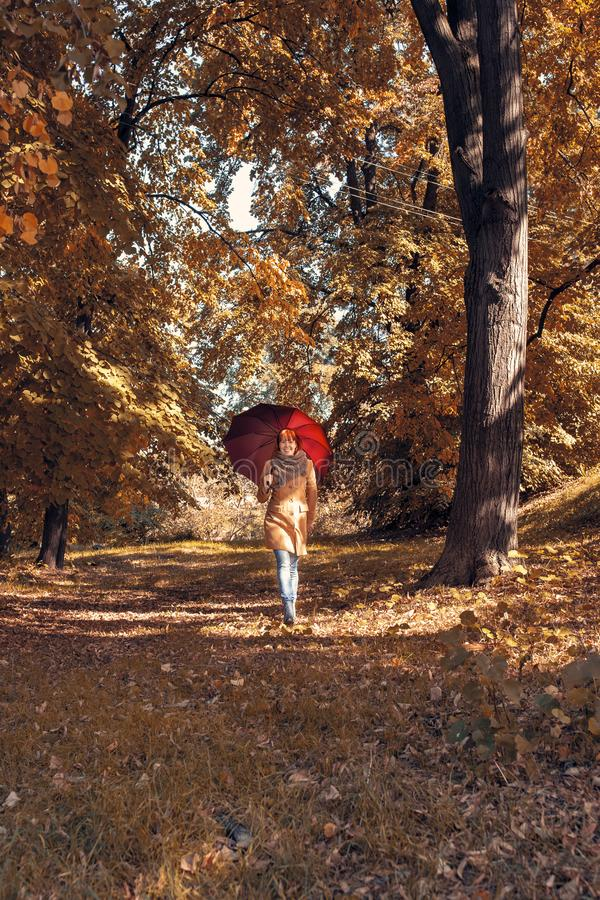 Fall. Autumn Park. Autumnal Trees and Leaves in sun rays. girl with umbrella enjoying in nature royalty free stock image