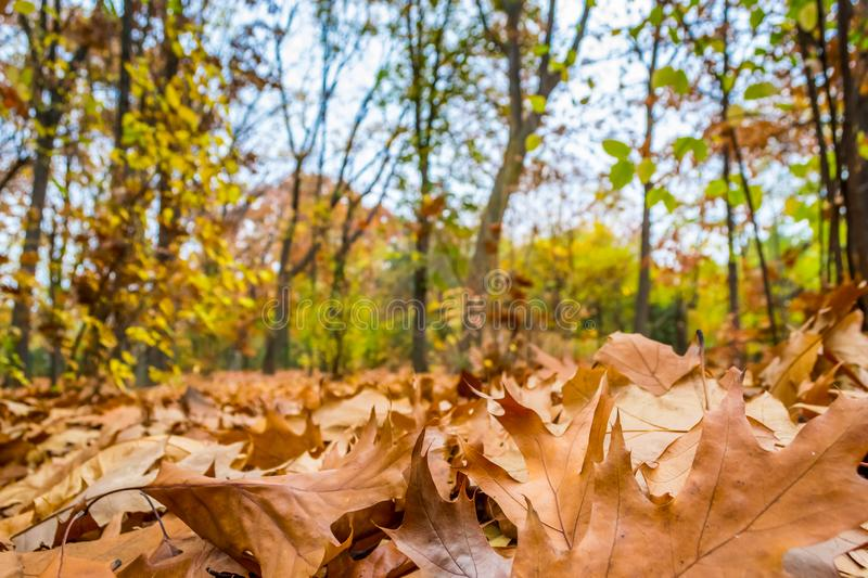 Fall Autumn Park royalty free stock image
