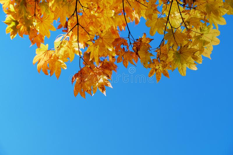 Fall and Autumn Season Concept, Look above the Sky shot royalty free stock photos