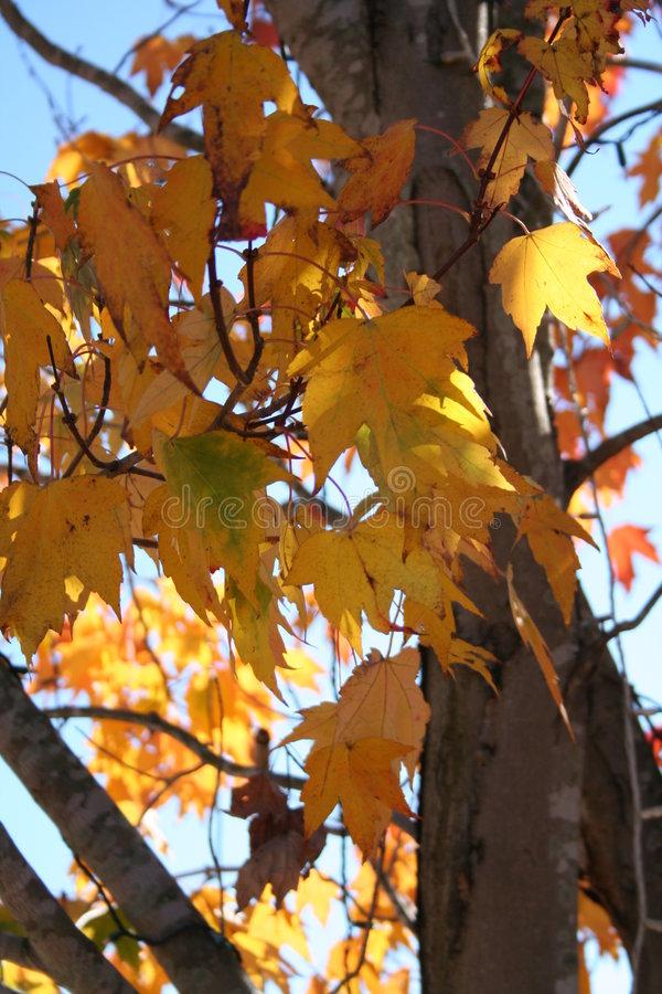 Download Fall Autumn Setting With Trees And Leaves Stock Photo - Image of cold, colors: 1548518
