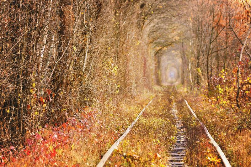 Fall autumn tunnel of love in Klevan Ukraine. royalty free stock photos