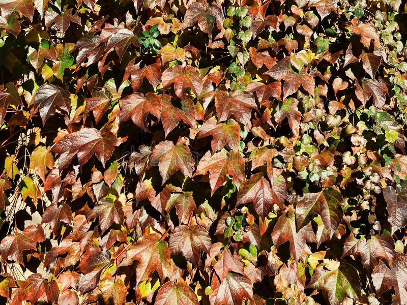 Natural leaves background stock photography