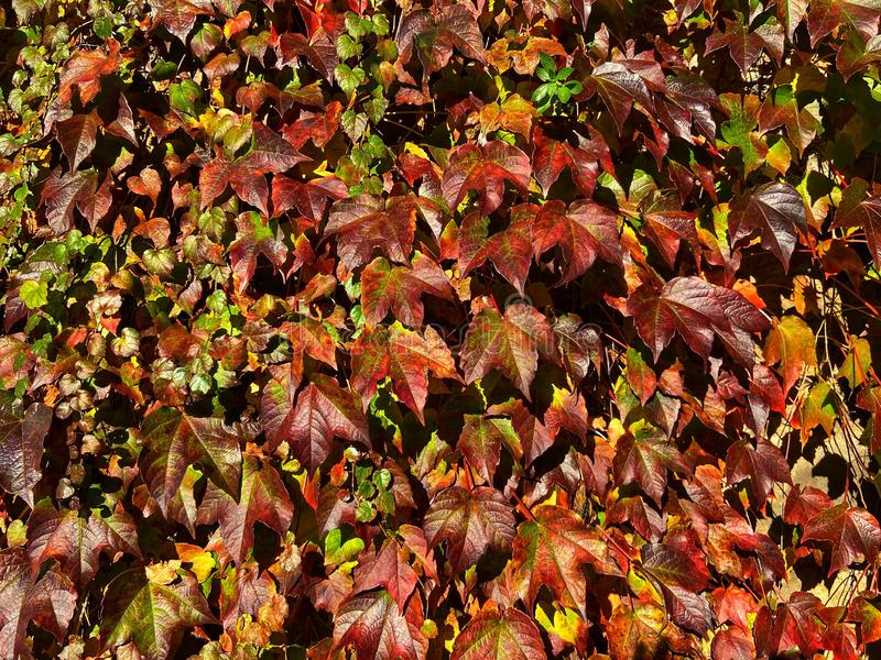 Natural leaves background stock photo
