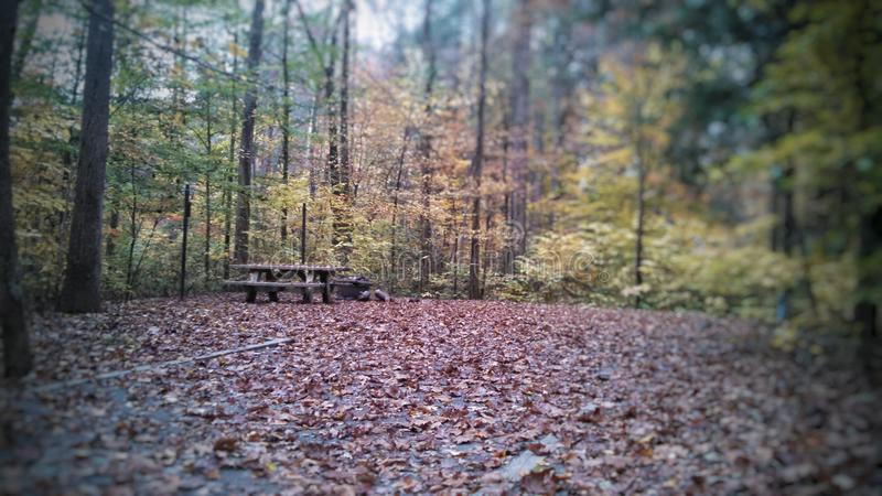 Fall-Bäume stockfotos