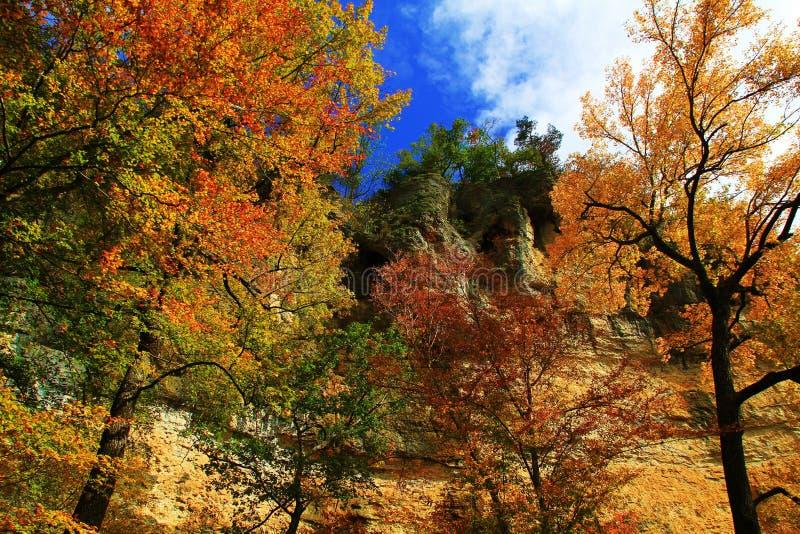 Fall-Bäume, die zu den blauen Himmeln erreichen lizenzfreie stockfotografie