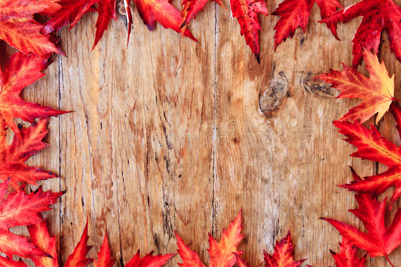 Download Fall background stock photo. Image of fall, maple, leaves - 21530810