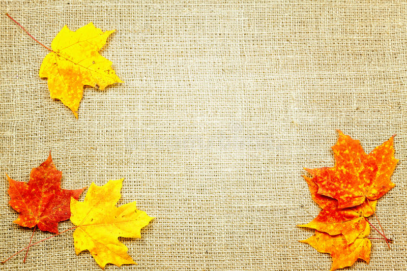 Download Fall background stock photo. Image of nature, background - 27355400