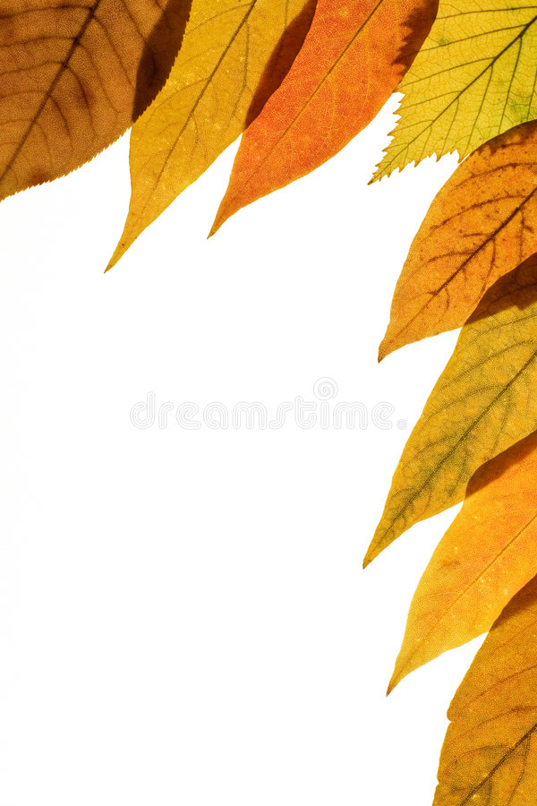 Free Fall Background 3 Royalty Free Stock Photos - 1258138