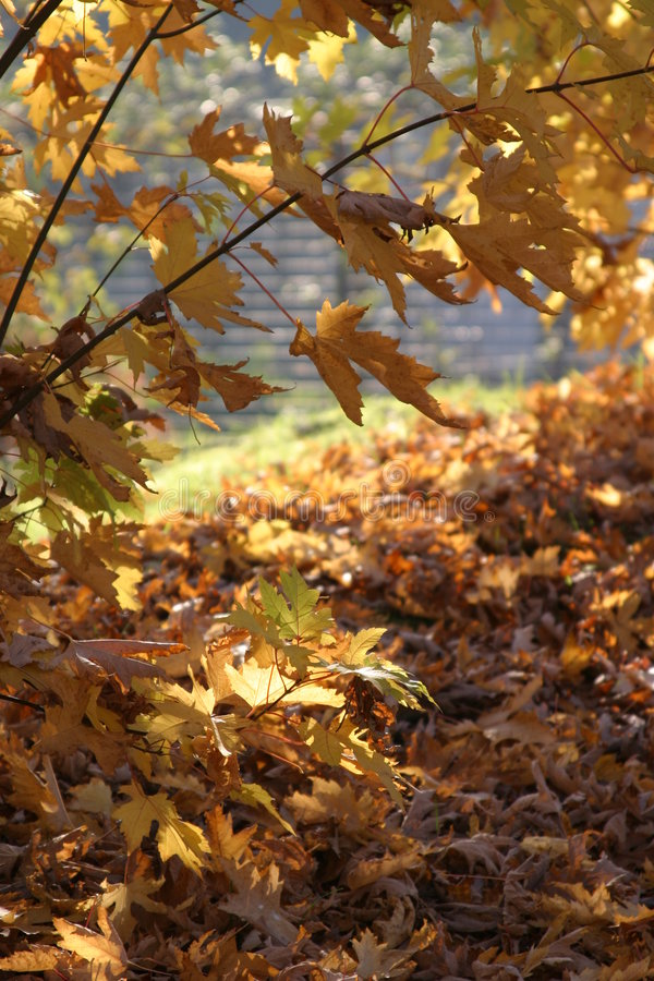 Download Fall Background Royalty Free Stock Photos - Image: 50588