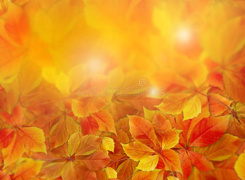 Fall background. Colorful red and orange autumn leaves on forest floor with sun rays coming through the foliage royalty free stock photography