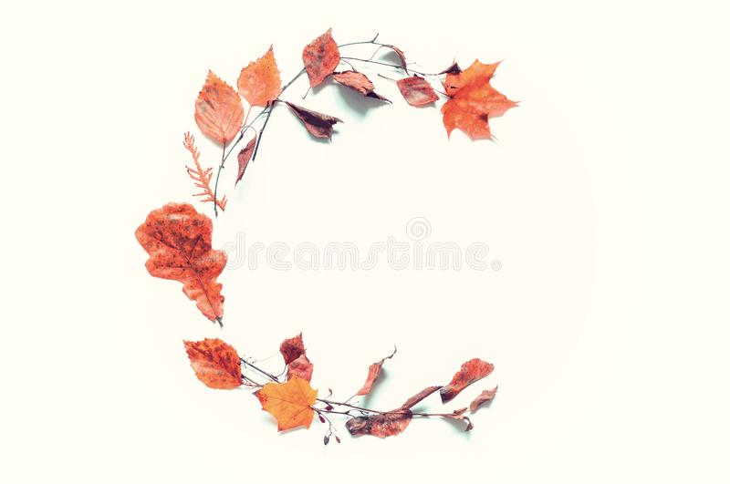 Fall background. Composition made of seasonal fall leaves on the white background with free space for text royalty free stock images