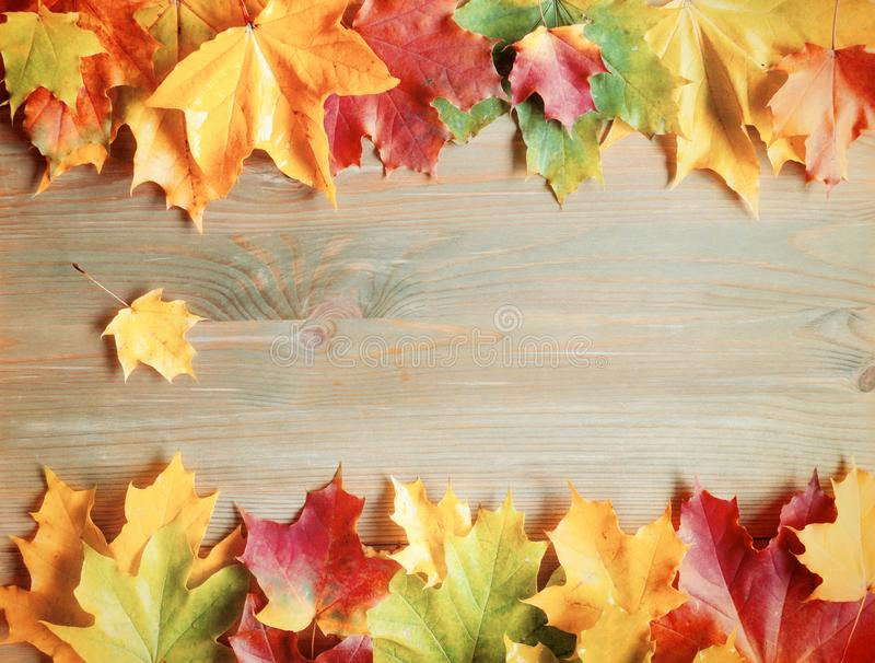 Fall background. Maple varicolored fall leaves on the wooden background stock photo