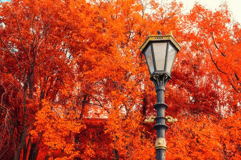 Fall background. Metal lantern on the background of the fall trees royalty free stock photos