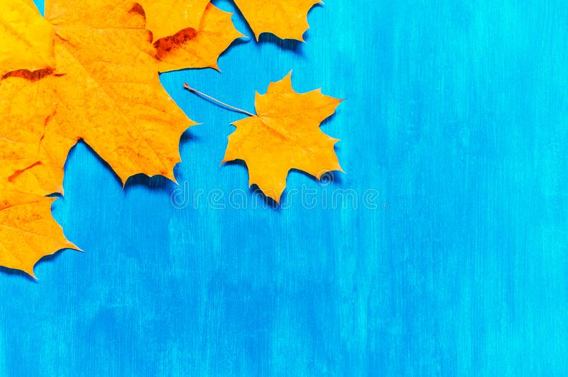 Fall background. Seasonal fall maple leaves on the blue background. Fall composition stock photos