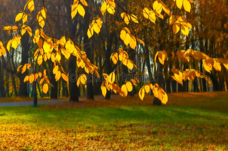 Fall background - yellowed tree branches with golden foliage on the background of city park alley in sunny evening stock image