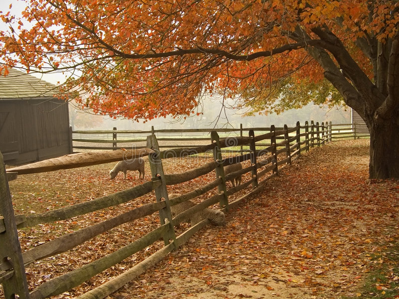 Fall Barnyard stock photo