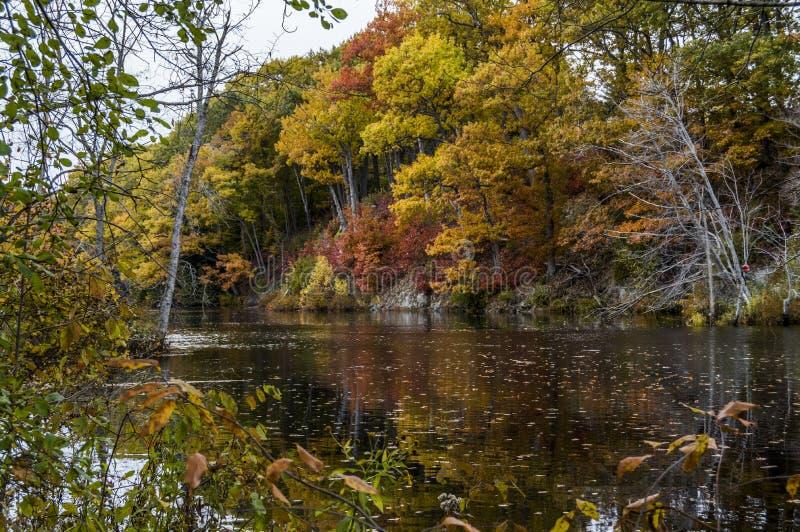 Fall-Baum-Show-Pracht über Fluss stockfotos