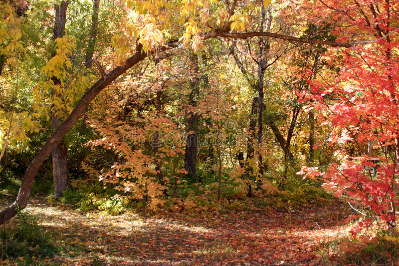 Fall and the Beautiful - 752 stock photo