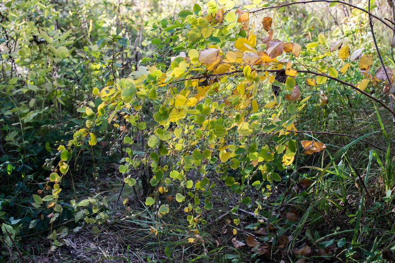 The fall bent the twigs in the woods royalty free stock photography