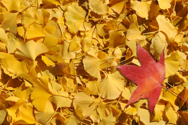 Fall-Blätter stockbilder
