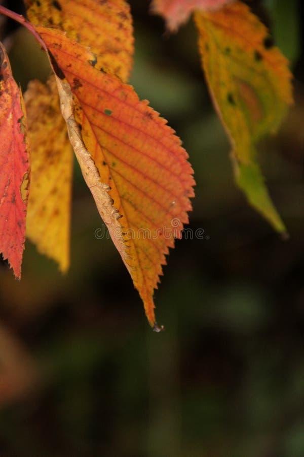 Fall-Blätter lizenzfreie stockfotografie