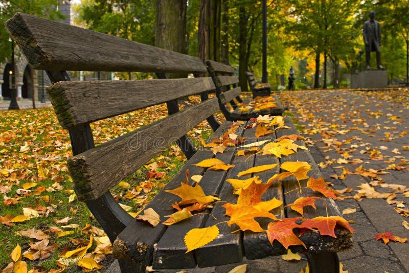 Fall-Blätter auf Bänke entlang Park stockfoto