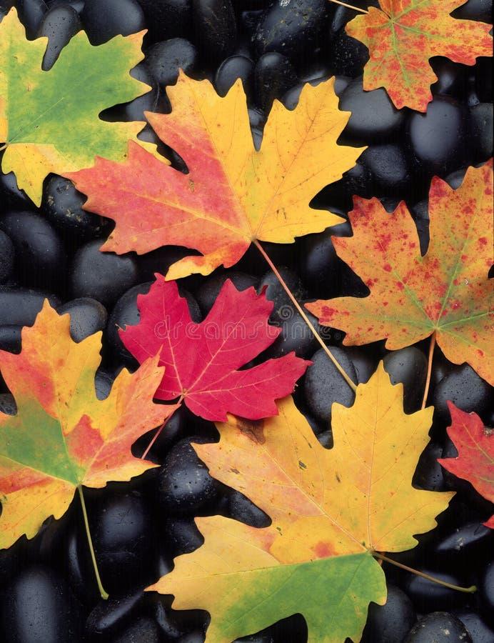 Fall-Blätter auf Felsen lizenzfreies stockbild
