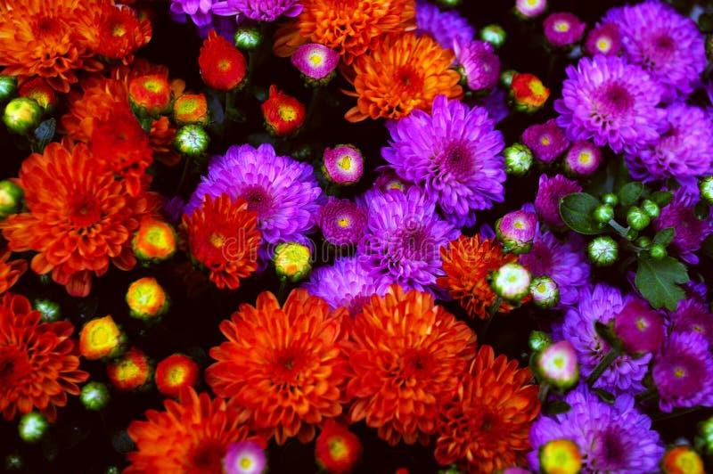 Fall blüht Blumenstrauß lizenzfreie stockfotos