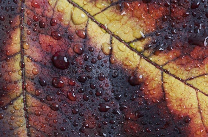 Fall-Blatt-Farbdetail stockbild