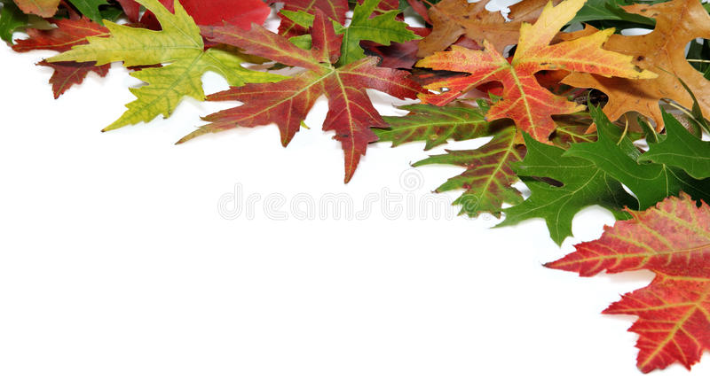 Download Fall Border With Autumn Leaves Stock Image - Image of colourful, space: 26942377