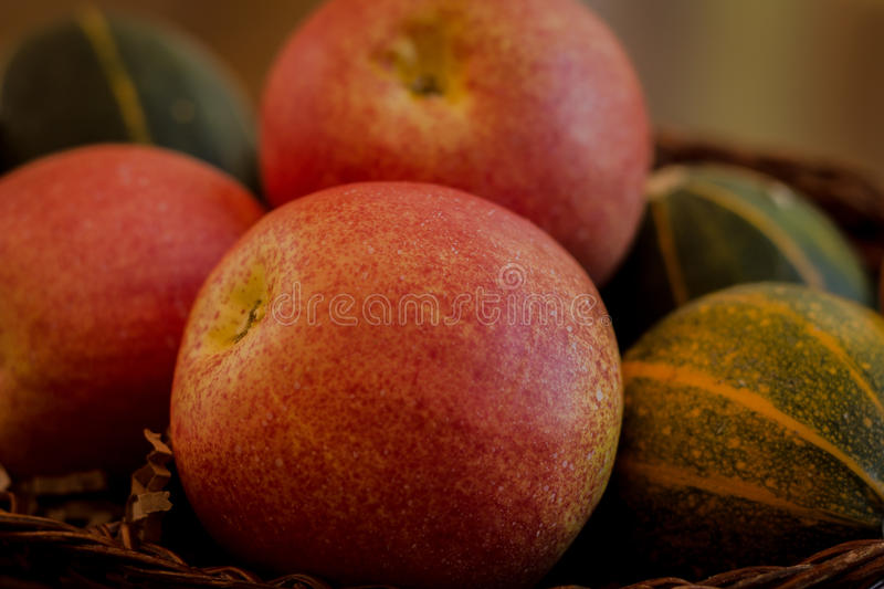Fall bounty of apples and gourds royalty free stock images