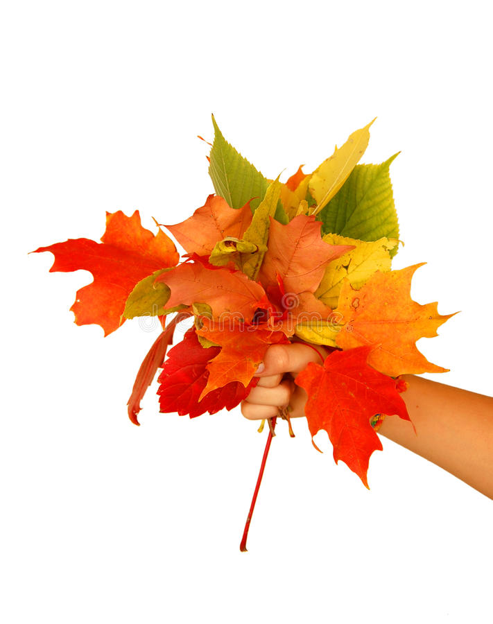 Download Fall bouquet stock image. Image of hold, give, bouquet - 26922891