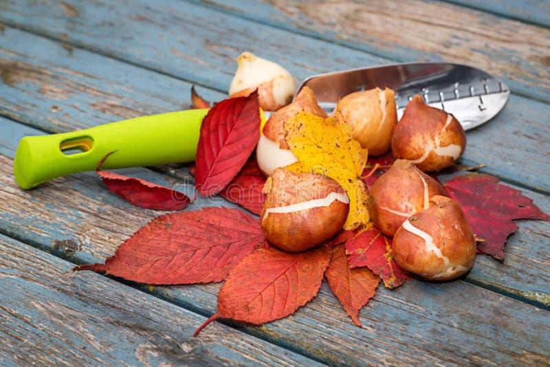 Fall Bulbs stock image