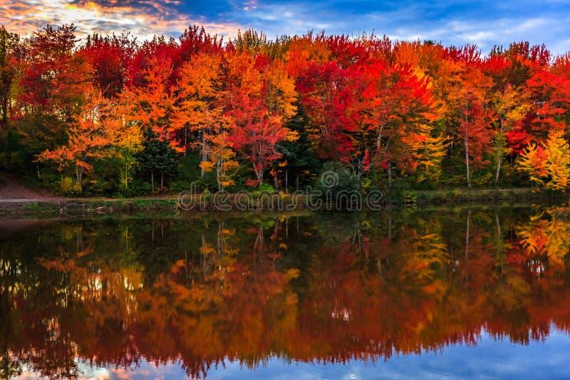 Fall bunt in New-Brunswick, Kanada stockfotos