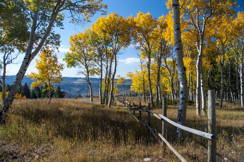 Fall on Casper Mountain Wyoming. Fall on Casper Mountain, Wyoming, with old rail fence. Quaking Aspen in full Fall color with golden grass in foreground royalty free stock images