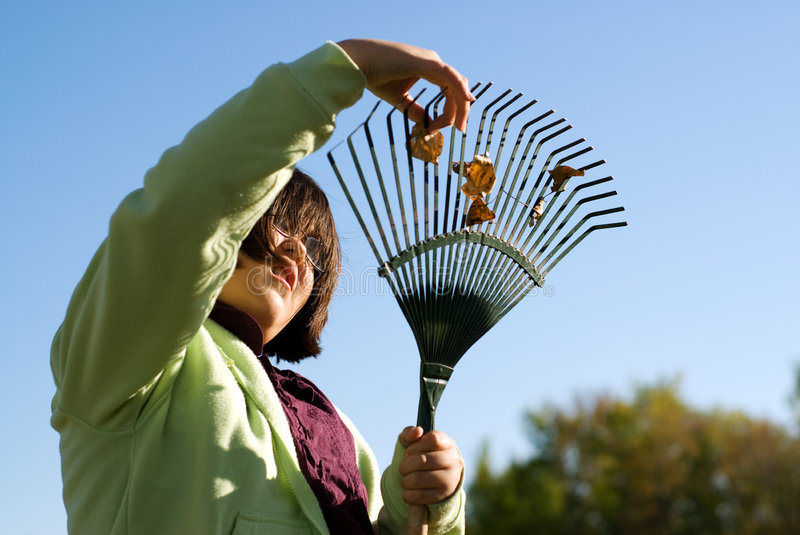 Fall Chores. A young girl raking leaves in the fall royalty free stock photo