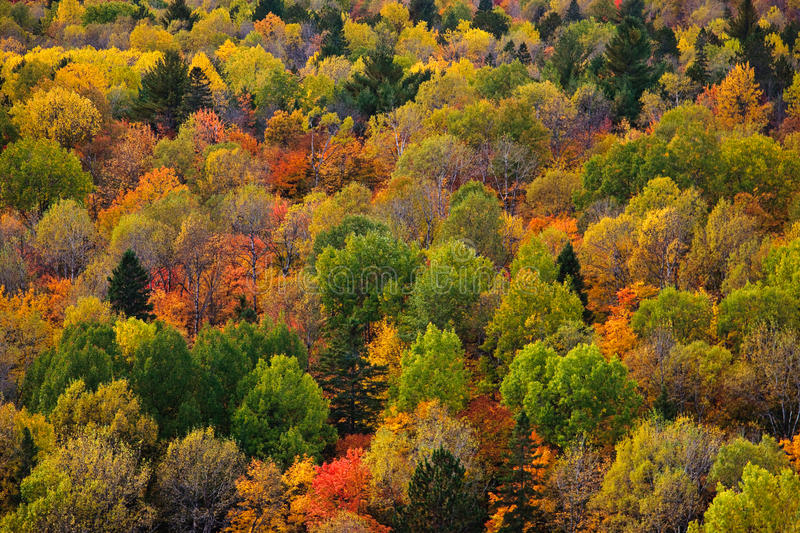 Download Fall Color stock image. Image of park, yellow, fall, algonquin - 16340639