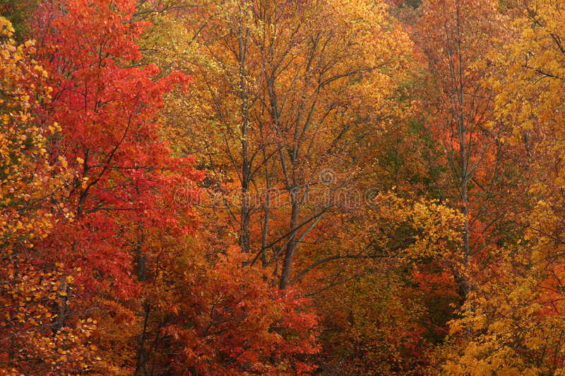 Fall color royalty free stock photos