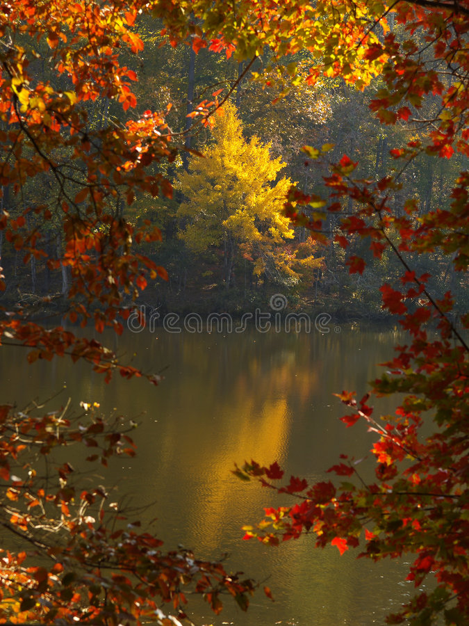 Fall Color royalty free stock photography
